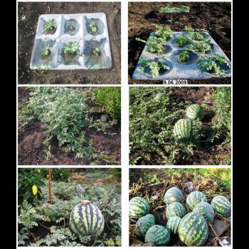 Сбор заказов. Агропанели - завтра нашего огорода! Увеличиваем урожай! Выкуп 1