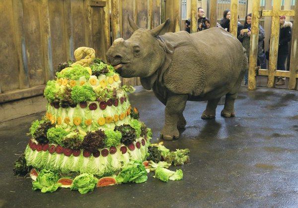 Торт для носорога