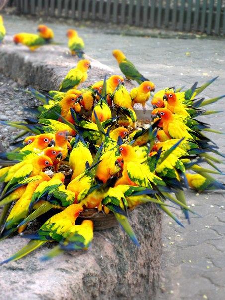 Будто букет цветов. Фото сделано в 2010 году в зоопарке Safari World (Бангкок, Таиланд).