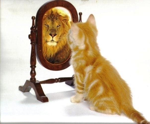 Из трезвого кота в пьяные тигры