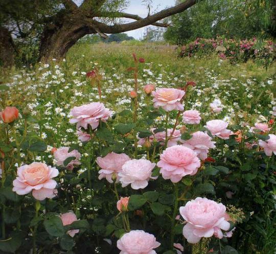 Красивый сад - моей мечты...