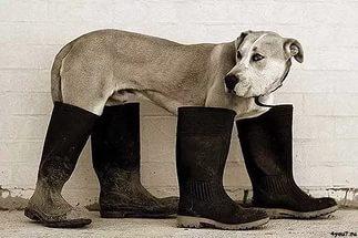 Сбор заказов: Модная обувка для наших ножек!!! Женская обувь: балетки, туфли, кеды. Цены от 370 руб!!!