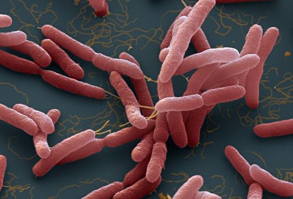 Из тропиков выходит новая смертельная инфекция мелиоидоз