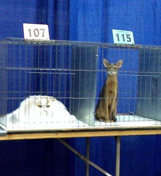 Коты бывают в жидком и твердом состояниях: