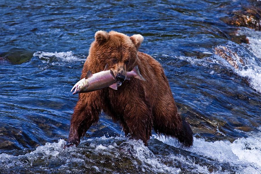 Сбор заказов. Хотите дикой рыбки? Вам сюда!
