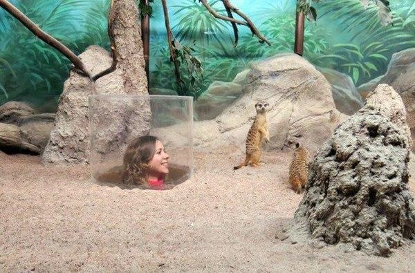 Вот в такой зоопарк я бы сходила!