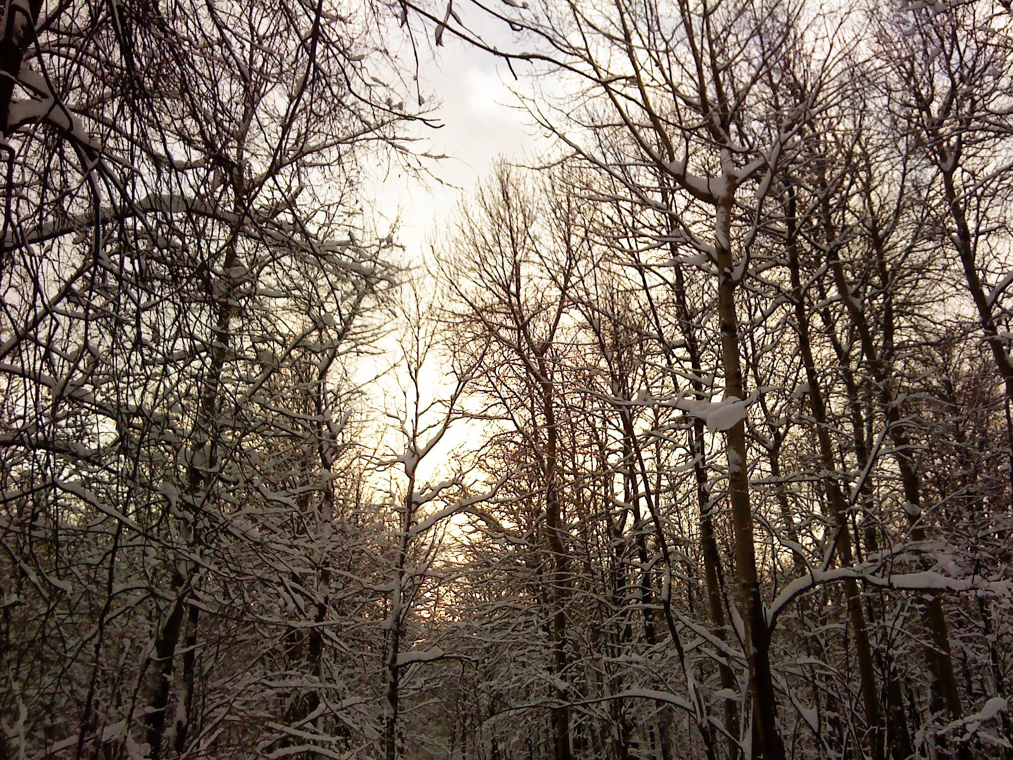 Еще немного зимнего леса