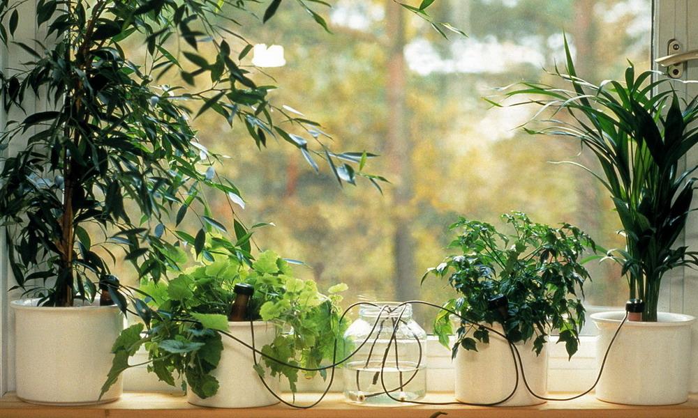 Экспресс - Сбор заказов Оросители увлажнители почвы для любых растений комнатных и садовых (включая комнатные цветы и