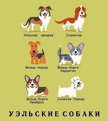 Запоминаем породы собак