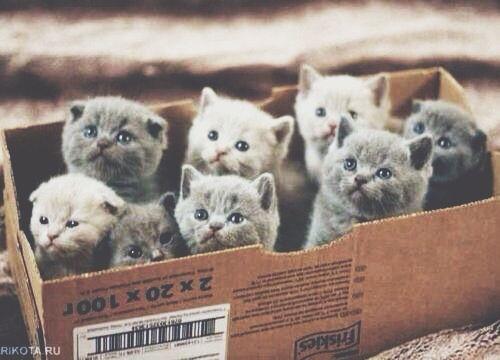 время, проведенное с кошками не пропадает даром. (с) Зигмунд Фрейд