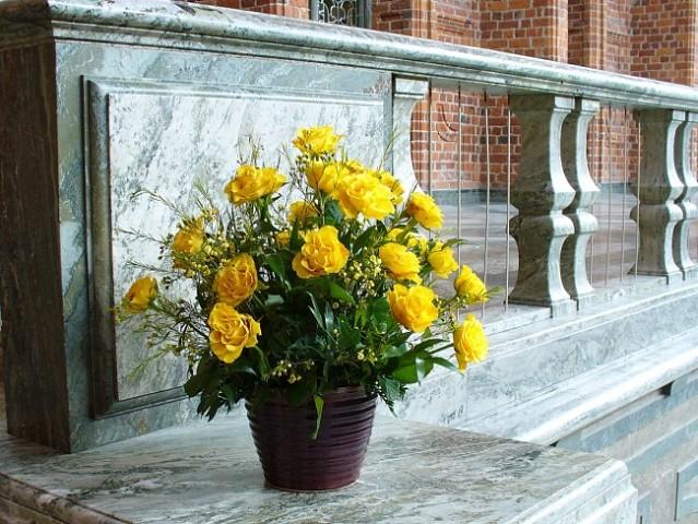 Домашние розы особенности ухода