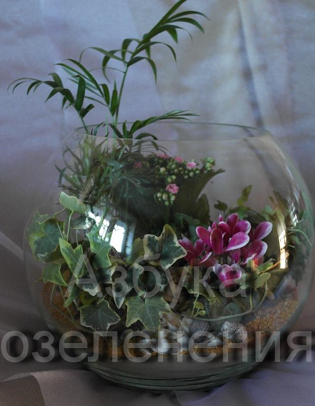 Приглашаю к прочтению моей статьи Флорариумы-секреты стеклянного садика