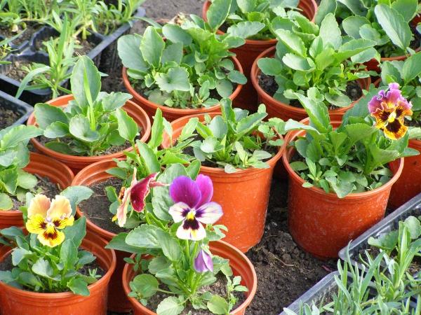 Семена цветов и овощных культур, газонные травы. А так же Удобная и эффективная лампа для подсветки растений. Сорта и гибриды для выращивания в сложных климатических условиях!