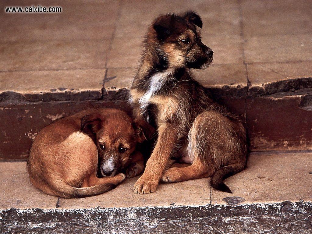 собака бывает кусачей только от жизни собачей...