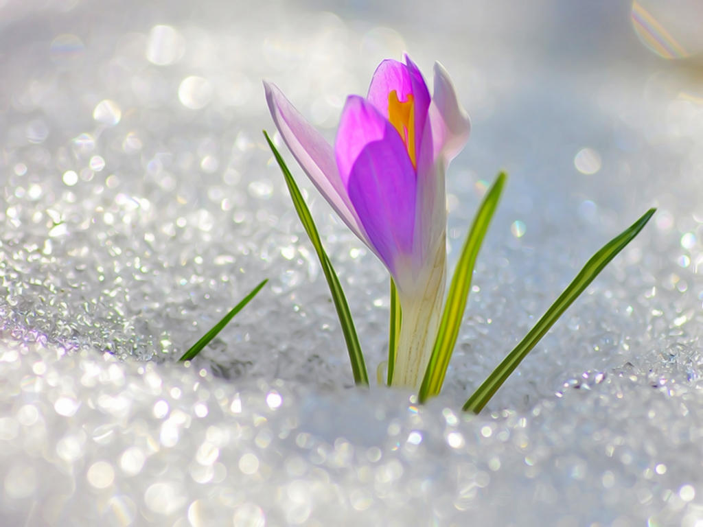 Наступила весна, а вместе с ней, чудный праздник 8 МАРТА!