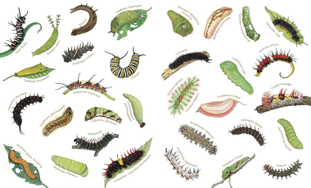Новая закупка Манн-Иванов-Фербер! Отличные новинки: книги про гусениц, бабочек, птенцов. А так же Космос, который мы