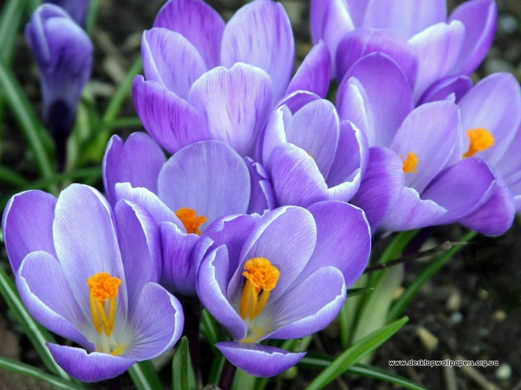 Девочки, весна- это нашем время)))) Время свежести, нежности и цветения))))