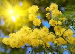 Дорогие девочки! С праздником Весны ВАС!