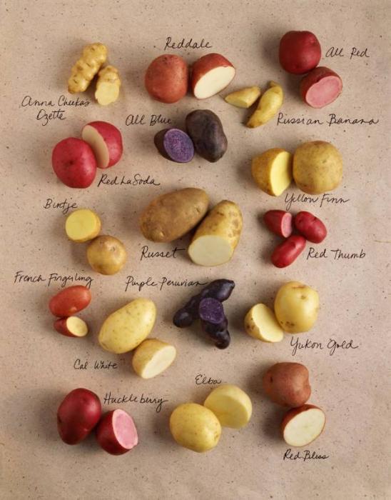 Что можно рассказать о картошке