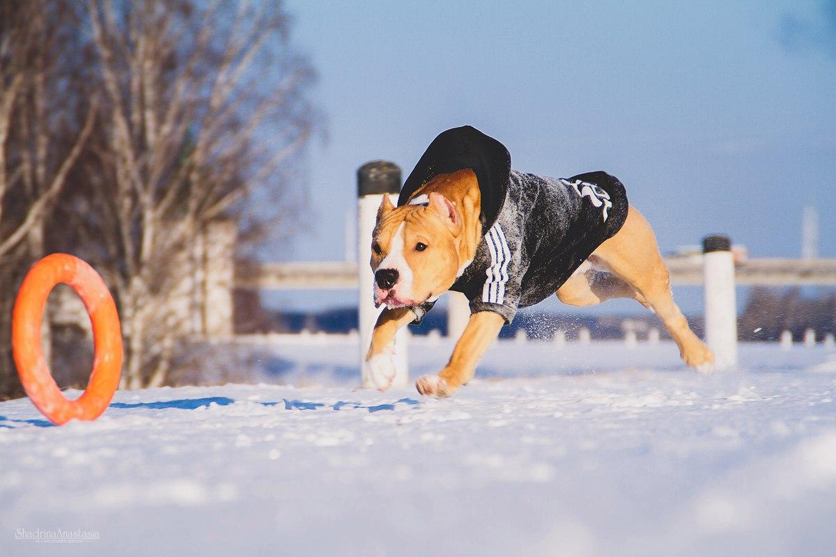Сбор заказов. Доглайк - любимая игрушка вашей собаки! Кольца-аналог пуллера, летающие тарелки фризби и новинка-мячики! Играют все! Сбор 3