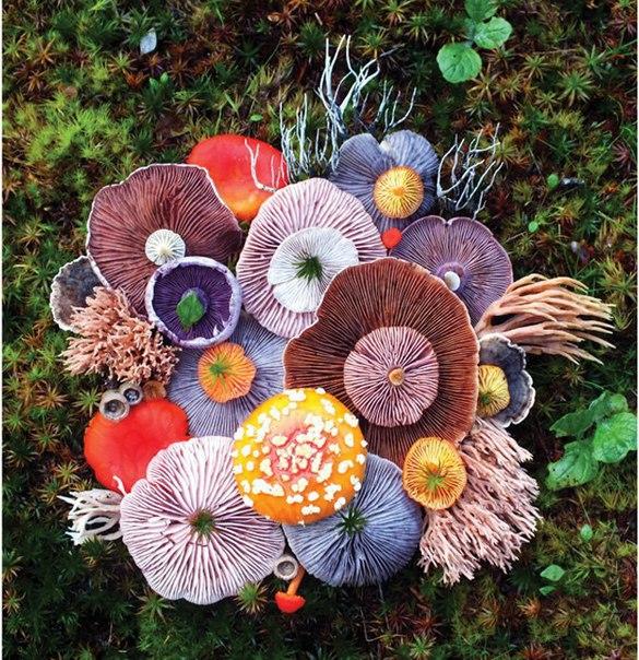 Это грибы