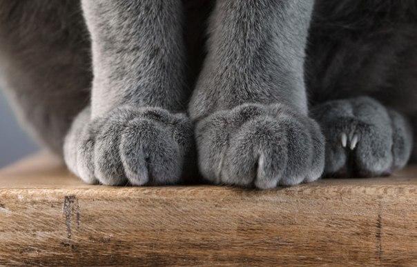 Почему котики топчут нас лапками