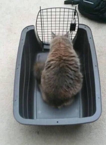Закрыл кота в корзине, третий час сидит в недоумении