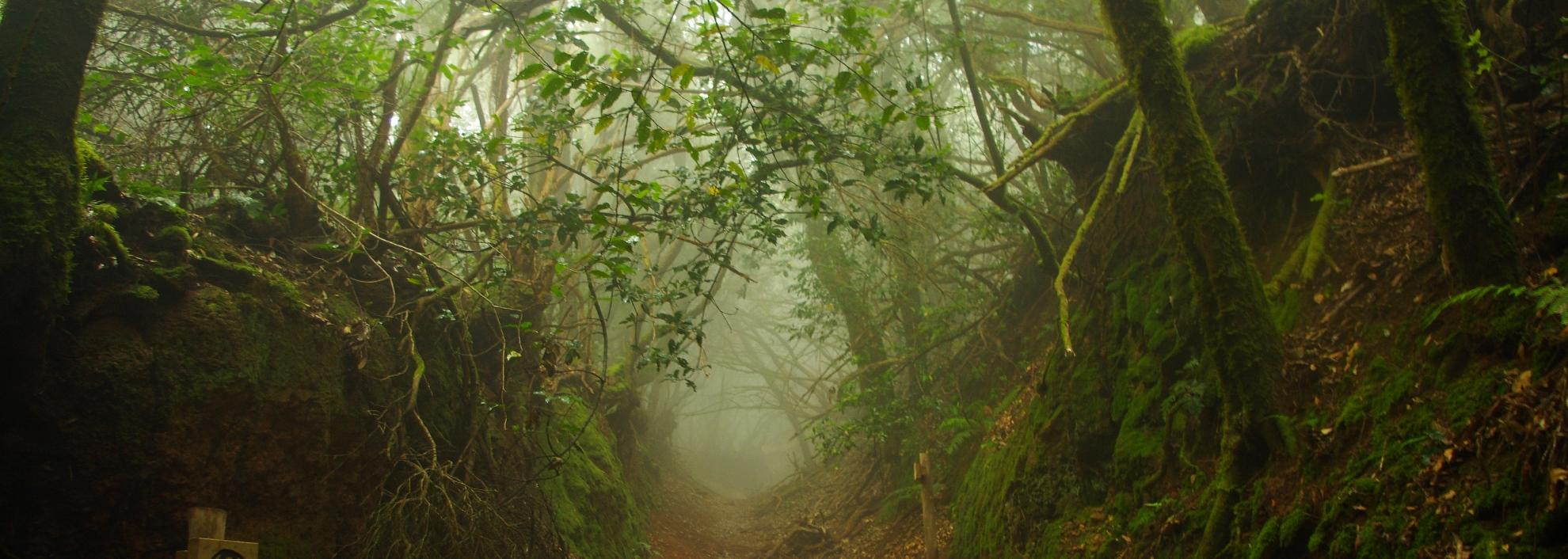 Ведьмин лес на Тенерифе