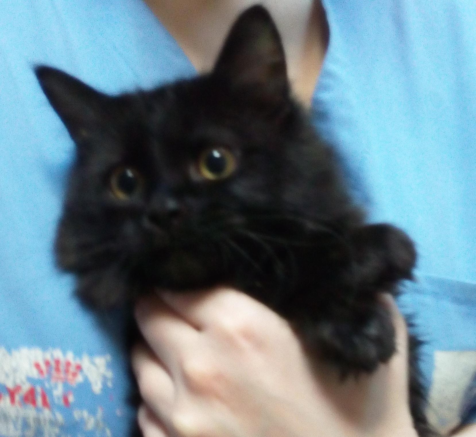 На котячьем халявном пристраивают красивейшего котенка - черного, пушистого. Может, кому нужен?