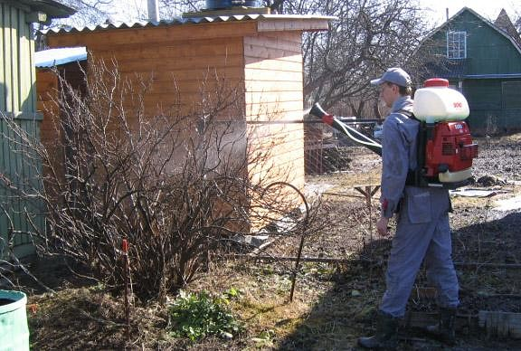 Чем обрабатывать садовые деревья и кустарники весной