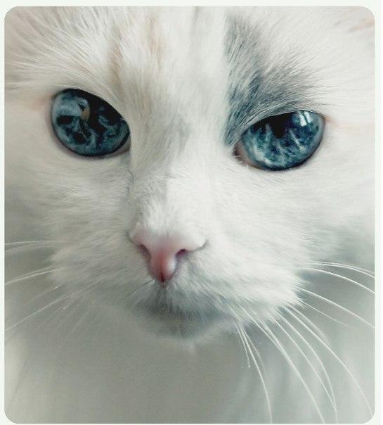 Вот это глаза!