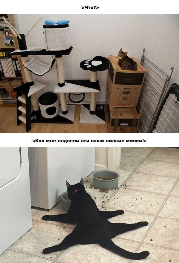 20 забавных примеров железной кошачьей логики