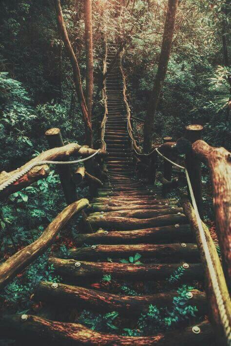 Лифт к здоровью, счастью и успеху не работает. Вам придётся воспользоваться лестницей и пройти всё....