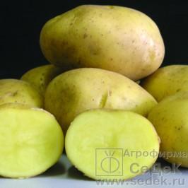 РАЗДАЧА!!! Саженцы роз, клематисов, лиан, лук-севок, семенной картофель. Агрофирмы Седек. Выкуп 3