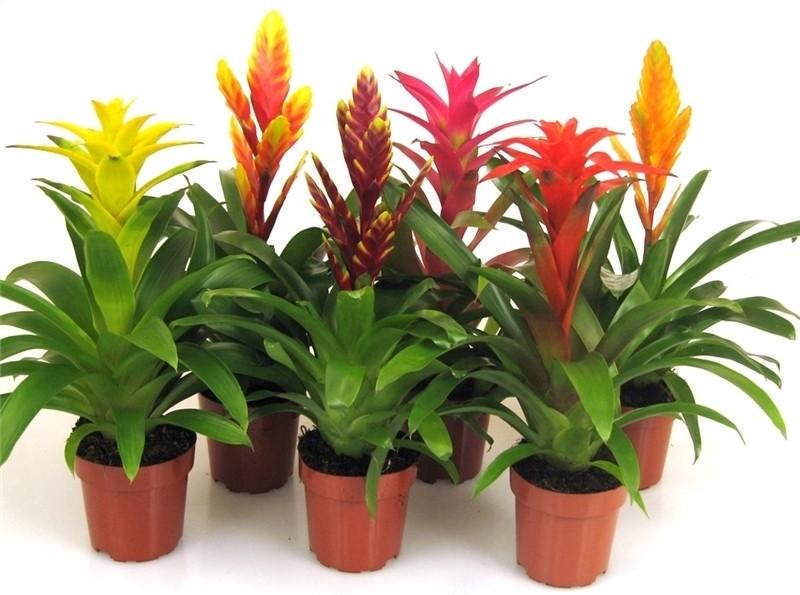 Комнатные растения и все для них! Горшки, удобрения, декоративные грунты, аксессуары. А так же садовые фигуры, вазоны, кашпо, балконные ящики.