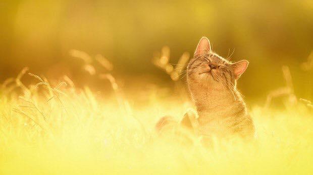 Есть два убежища от жизненных невзгод: это музыка и кошки...