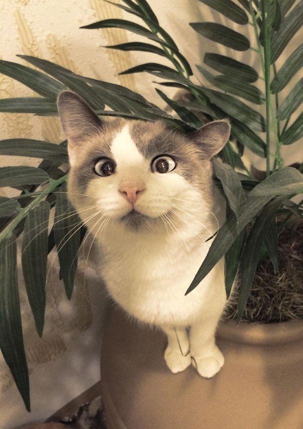 Особенные котейки, которые доказывают, что любить нужно не за внешность