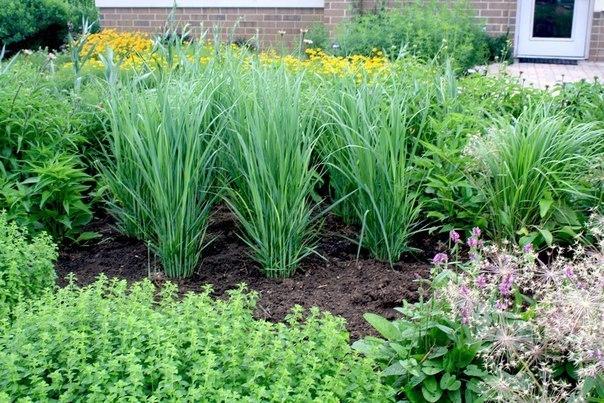 Какие растения защитят ваш участок от вредителей