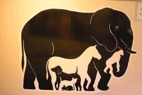 Быстрый тест на внимательность! Сколько животных вы видите на картинке?
