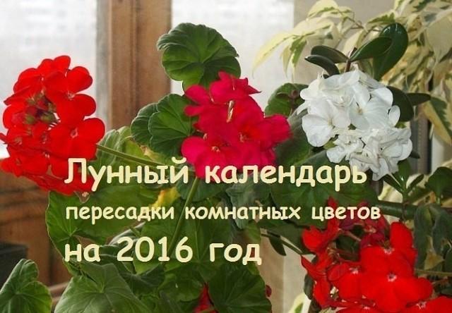 КАЛЕНДАРЬ ПЕРЕСАДКИ КОМНАТНЫХ РАСТЕНИЙ НА 2016 ГОД