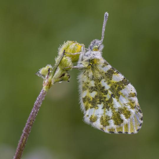 То, что гусеница называет Концом Света, Учитель называет бабочкой...