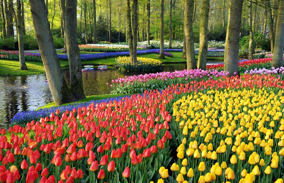 Сбор заказов. Цветик-семицветик - луковичные цветы - тюльпаны, нарциссы, гиацинты, крокусы, лилии! Предзаказ на осень 2016. Стоп 25 мая