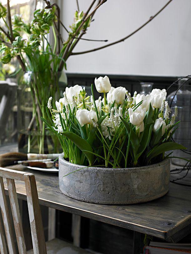 Луковичные для Вашего сада от Агрофирмы Пoиsk. Всегда отличное качество! Только лучшие и проверенные сорта! Есть эконом-упаковка.
