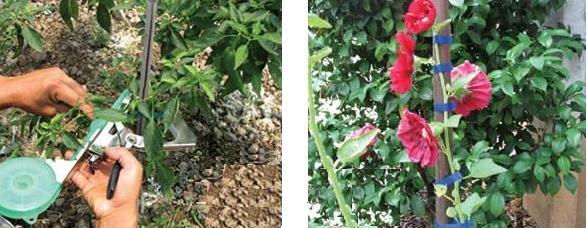 Сбор заказов РуCCкий огород-12: Фитолампы для рассады с красно-синими светодиодами LED, автомат. степлер для подвязывания, квасцы для окраски гортензий, отпугиватели змей, кротов, улиток, прудочист, закаточная машинка, поворотные ножницы для травы, нарезк
