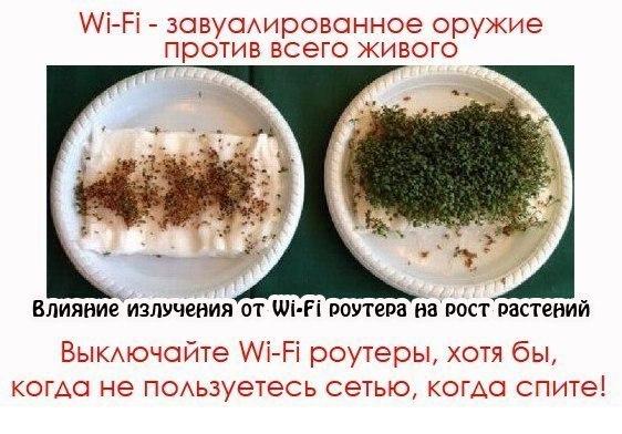 Wi-Fi ГУБИТ ВСЁ ЖИВОЕ... В ТОМ ЧИСЛЕ ПЧЁЛ.