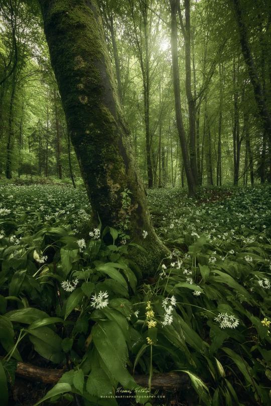 Я предпочел бы быть лесом, нежели улицей...