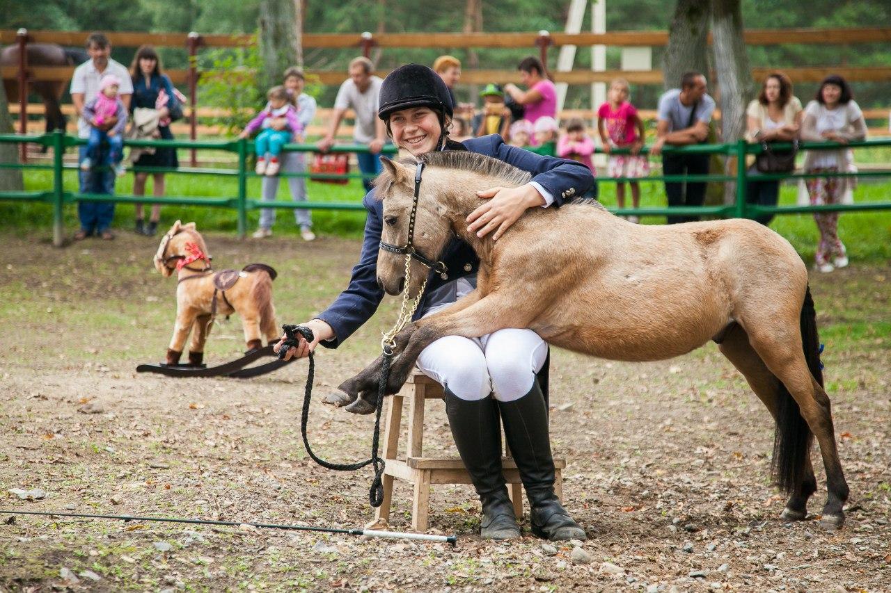 Давайте знакомиться! Самая маленькая порода лошадей в мире гуляет по Нижнему Новгороду.