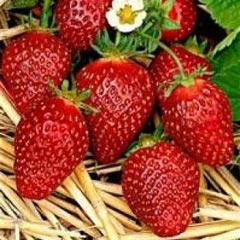 Продам землянику садовую 200 руб 1 кг