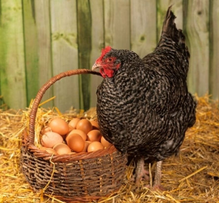 Деревенские яйца. 1 десяток = 80 руб.