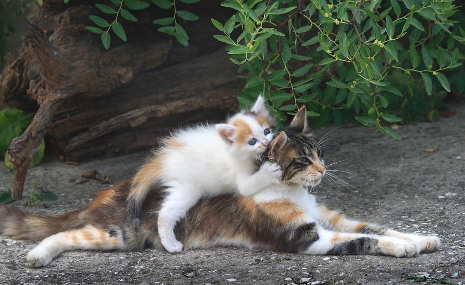 Кошке подобает только одно имя Ваше величество